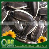 2014 new crop american type confectionary bulk black striped Oil sunflower seed
