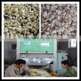 Belt Type CCD Color Sorter for Fresh Garlic or beans or seeds 0086 371 65866393
