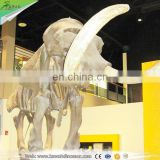 Kawah fiberglass simulation artificial mammoth replica animal skeleton