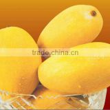 Fresh Pakistani Mango with Approved EU Quality Standards