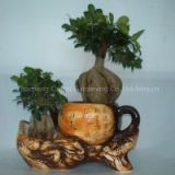ficus ginseng microcarpa mini potted bonsai tree Taiwan Ficus Banyan Fig Indian Laurel Fig indoor ornamental plants