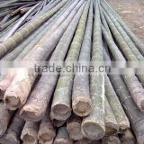 Straight moso bamboo poles for construction & building materials bamboo poles cheap bamboo cane productsraw bamboo poles
