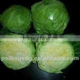 Chinese Round Green Cabbage New!!HOT!!