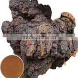chinese herbal anti-cancer plant extract Chaga Mushroom Extract powder