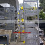 laying cages for quail from China of factory