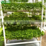 PVC Pipe NFT Vertical Hydroponics System For Sale