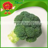 Chinese New Crop high quality grade A low price IQF broccoli bulk broccoli