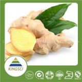 Hot new product for 2015 cold cough medicine ginger extract 5% Gingerol