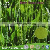 High Quality Barley Grass,Barley Grass Extract ,Barley Grass Powder(Ratio:4:1~20:1)--NutraMax Supplier