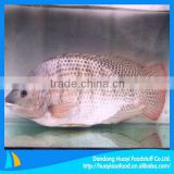 new fresh frozen red tilapia wholesale