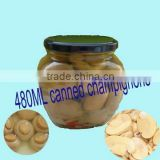 canned champignons