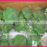 NEW ARRIVAL HOT SELLING-2011 New Design Most Popular Natural vegetable decoration