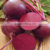 Natural food colorant dark bordeaux-red BA-4001-WS Betanin ( Red Beet Powder)