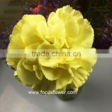 Natural Carnation Importers High Quality Fresh Carnation Flowers From China Wholesale Yellow Carnation Flowers