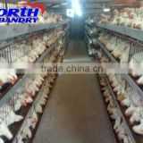 full automatic chick drinking system for broiler chicken