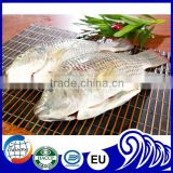 Fresh Fish Frozen Tilapia Gutted and Scaled