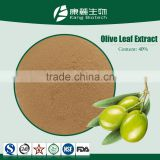 100% Natural Organic olive leaf extract powder 40% Oleuropein Canavium album Raeuseh Extract
