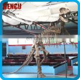 Dinosaur Skeleton Replicas for Indoor Playground