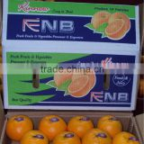 Kinnow Mandarin Tangerine Orange Citrus fruit from Pakistan