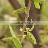 White Willow Bark Extract salicin 50% 98%