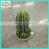 High quality 20cm plastic cactus plant names with ceramics pot