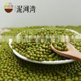 export grade green mung bean 2016 crop