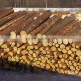 INquiry about RUSSIAN Timber Log / Sawlogs /Wood round logs / lumber /PINE / SPRUCE / LARCH / BIRCH