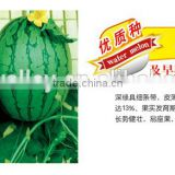 Chinese Hybrid F1 Small Gift Watermelon Seed For Growing about 3kgs-Spring Fortune Jade F1