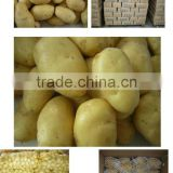 Certificated GAP Fresh Potato
