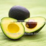 Natural Avocado Eucalyptus Baby Oil Bulk