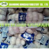 Factory supply New season High quality Fresh Garlic 5.5.0CM UP small mesh bag, in 10 kg carton