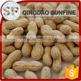 Bulk organic roasted peanut in shell for sale