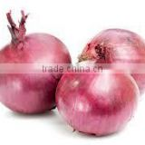 Indian Gujarat Fresh Onion