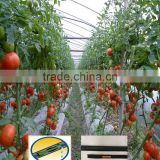 drip irrigation tube with flat dripper