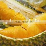 Water Soluble Durian Extract for beverage Durio zibethinus Murr