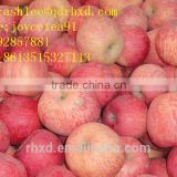 Yantai Red Fuji Apple Fresh Supplies Come