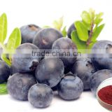 Hot Sale Low Price Wholesale Natural Organic Acai Berry Extract Powder, Acai Berry Capsules, Anthocyanin