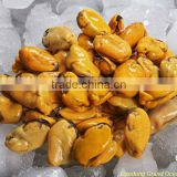 seafood frozen cooked mussel meat