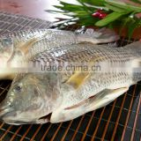 Gutted & Scaled Tilapia Frozen Clean Fish