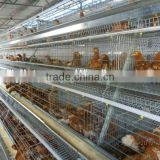 Poultry Farming Equipment | Automatic Poultry Farming Equipment