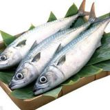 Horse Mackerel/Pacific mackerel/japanese mackerel