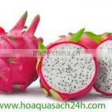 Vietnam Dragon Fruit with high quality and Best Price