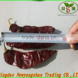 YIDU Red Pepper/YIDU Red Chilli/CHINA :CHILLI/PEPPER