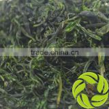 Top quality weight loss sweet ku ding ilex ku ding cha Chinese herb small leaf kuding green tea