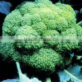2015 F1 Hybrid Excellent Green Cauliflower Seeds Broccoli Seeds For Growing