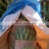 Perforated banana bunch cover with non-woven bag