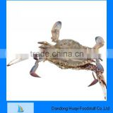 Fresh frozen seafood good quality crab in new season