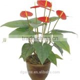 artificial green bonsai anthurium WB11-18-6J-24RD ( plant bonsai flower tree of Este )