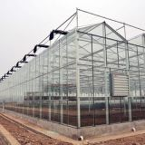 Long Service Life Venlo Type Glass Greenhouse with Steel Structure