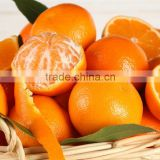 Orange Oil / Orange Essential Oil - Cold Pressed / Sweet Orange Oil